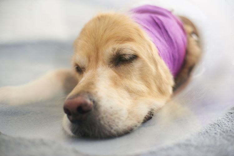 犬の顎骨骨折(上顎・下顎)【原因】