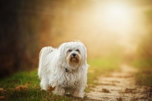 病気の可能性もある犬のしゃっくり、正しい見分け方と対処法