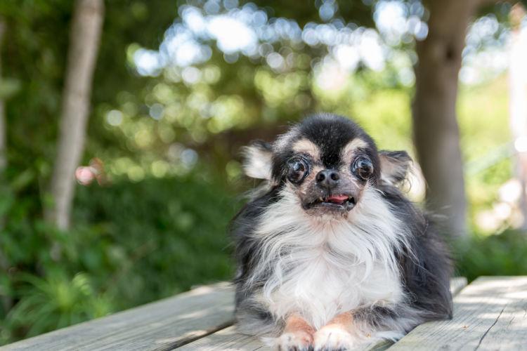 犬の顎骨骨折(上顎・下顎)【発症しやすい犬種】