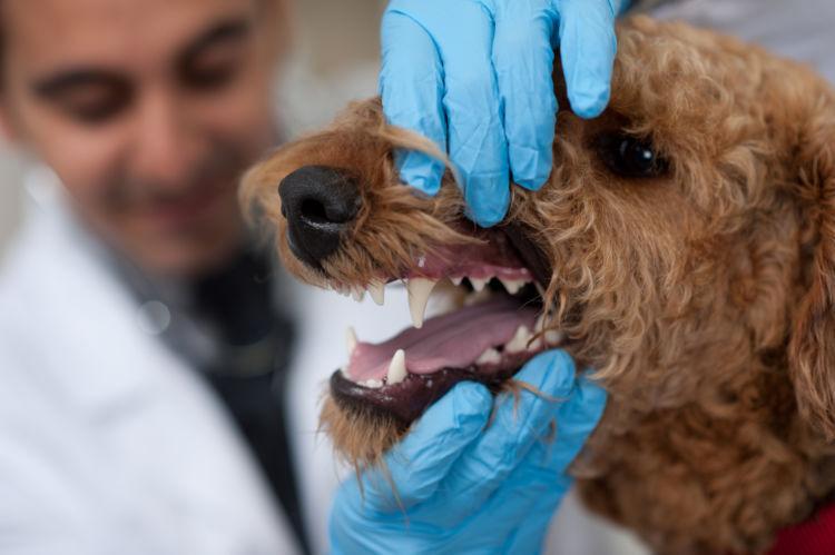 犬の顎骨骨折(上顎・下顎)【診断方法】