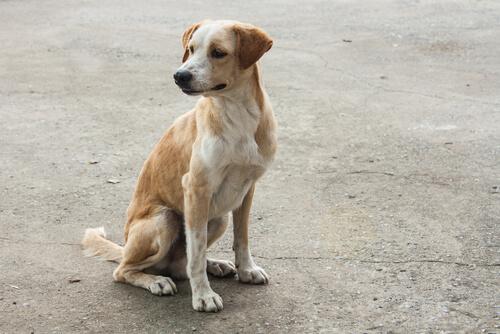 犬が震える4つの原因。危険な病気のサインを見逃さないためには?