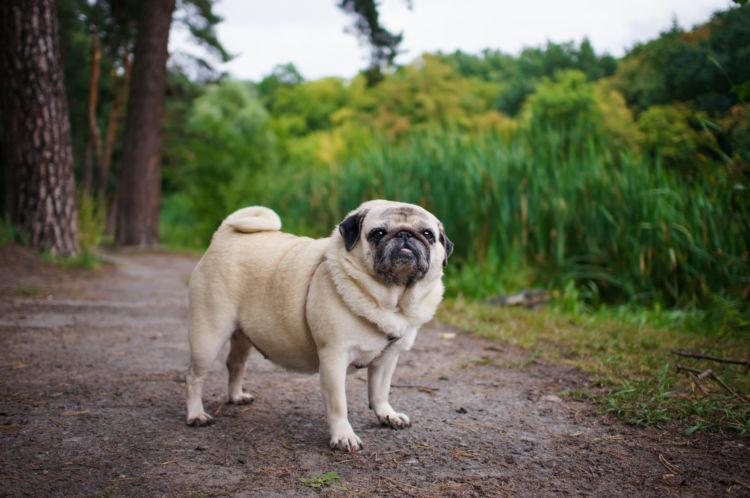 犬の関節炎