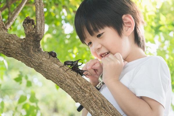 カブトムシを観察する男の子