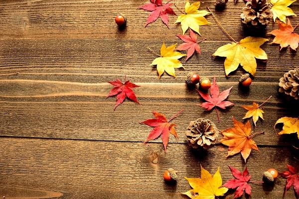 紅葉やどんぐりなどが散らばっている写真