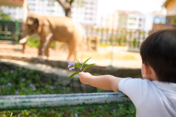 動物園にいる子ども