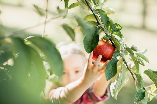 9月の3歳児の写真