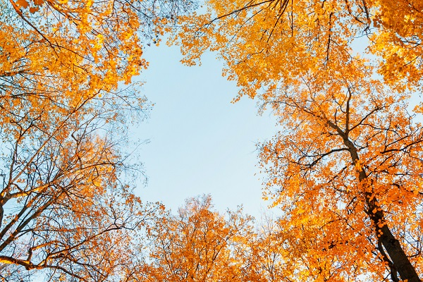 10月の写真
