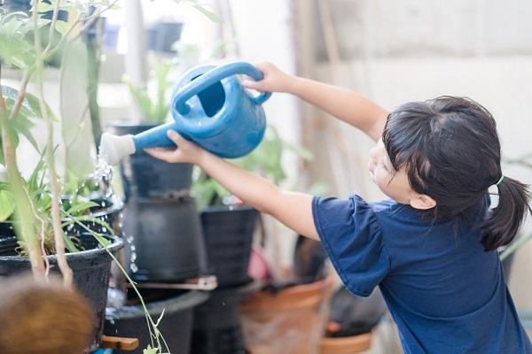 植物に水をあげている様子