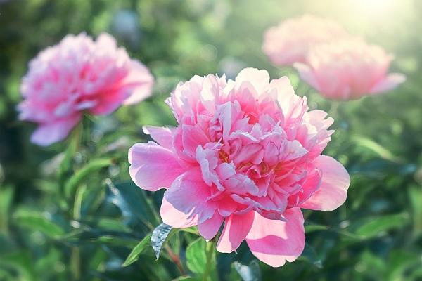 春分の日とは。意味や由来、子ども向けにわかりやすく説明する言い換え例