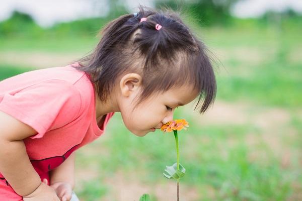 みどりの日の由来とは?意味や過ごし方、子ども向けにわかりやすく伝える方法