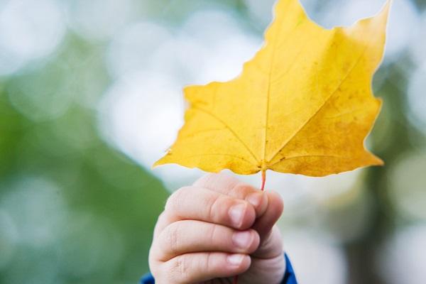 秋分の日の意味とは?由来や風習、子ども向けにわかりやすく説明する方法