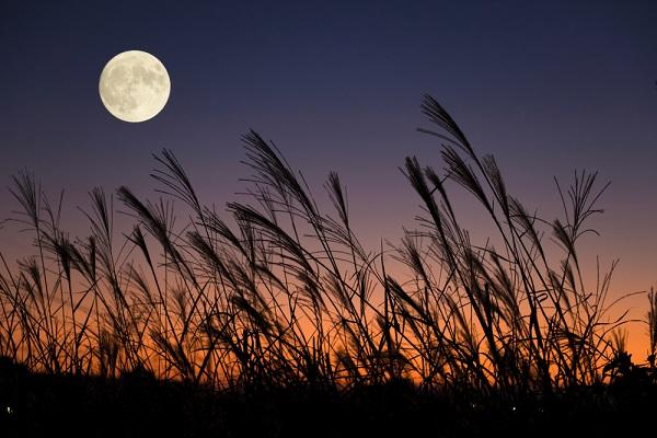 月とススキの写真