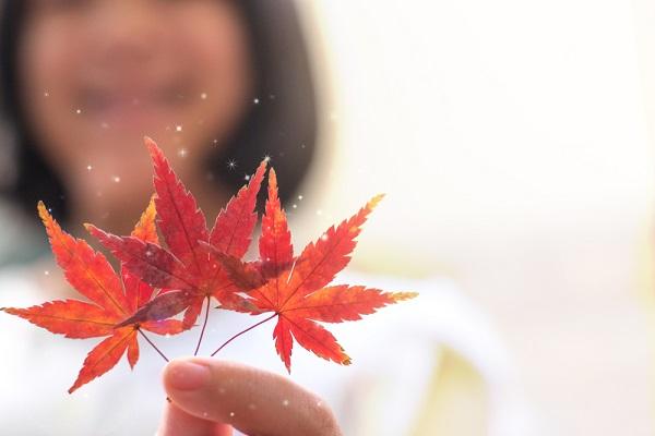 11月のおたより作成のポイント。保育で使える、季節の書き出しや子どもの姿を表す文例など