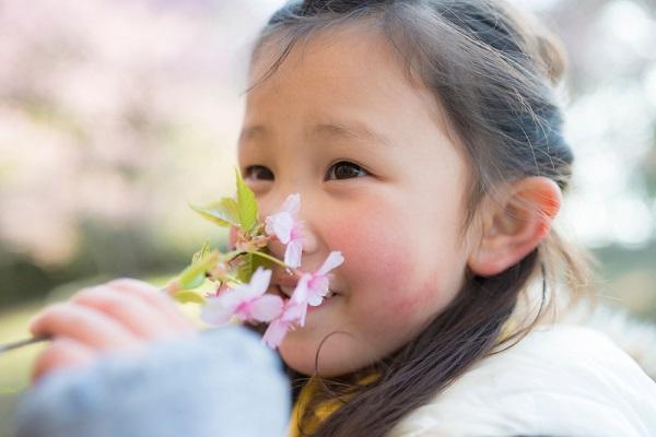 桜を持っている女の子