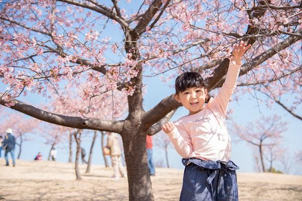 春(3月・4月・5月)に使える保育の壁面。桜やたんぽぽなどの手作りアイデア12選。