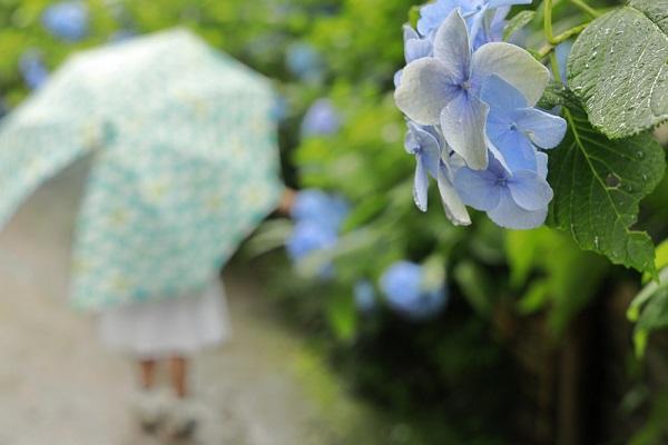 梅雨にぴったり!保育園であじさいの製作をしよう。スタンプや切り絵などのアイデア