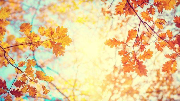 立秋とは?時期や言葉の意味、子ども向けにわかりやすく伝える方法