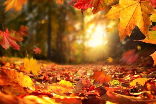 保育園の秋