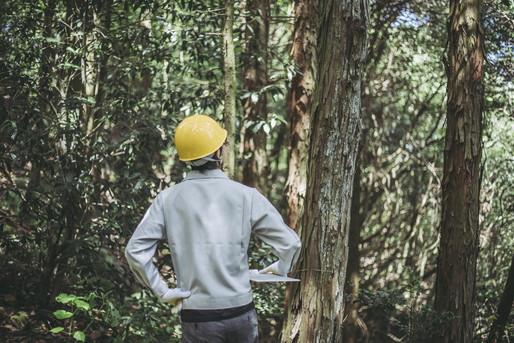 林業をする男性
