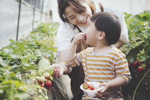 果物狩りする親子