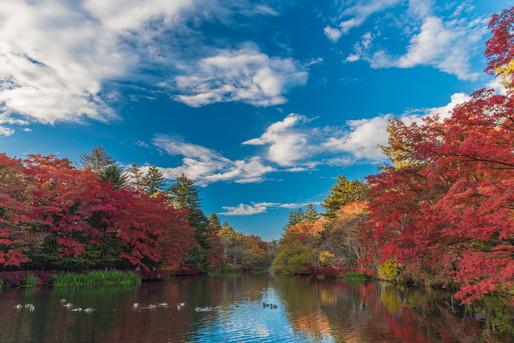 紅葉の季節には美しい景色が楽しめます