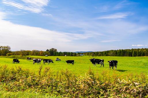 弟子屈町の牧場