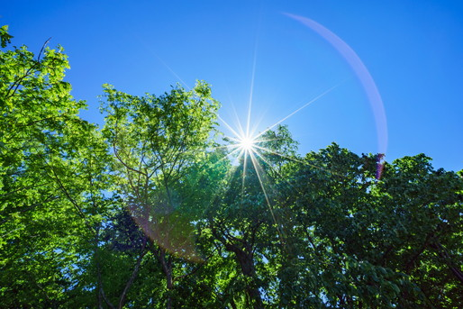 緑と太陽光