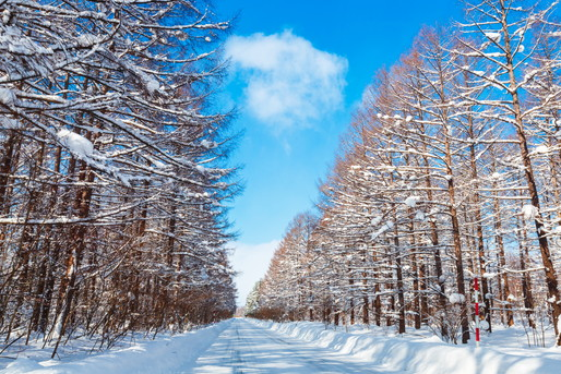 美瑛町の雪道