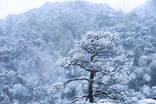 新潟 雪景色