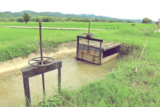 田んぼの水門