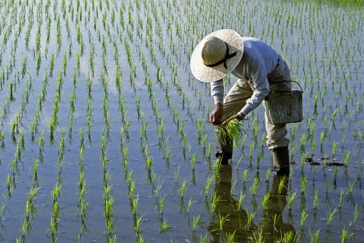 田んぼ作業をする農家