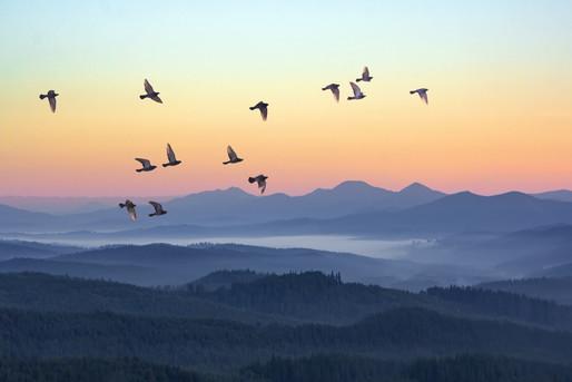 夕陽と山と鳥