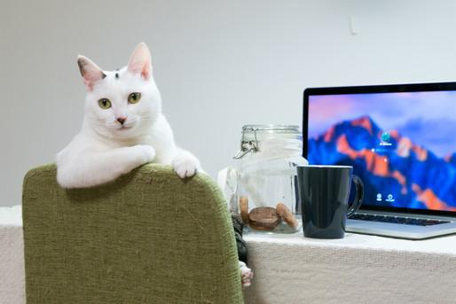 仕事する猫