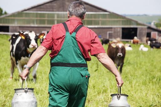 牛の世話をする男性