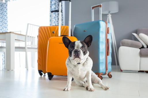 犬とスーツケース