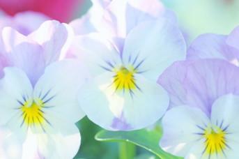 健やかな心、基本的な生活習慣、自主性、思いやりが身につく保育園です。