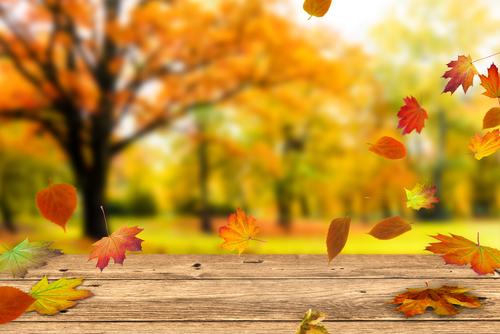 保育園に秋を呼ぼう 9月、10月、11月向け 折り紙アイディアとねらい