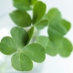 Yamana Mami