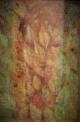 菊池 麻衣子