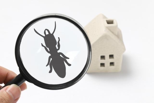 シロアリと黒アリの見分け方