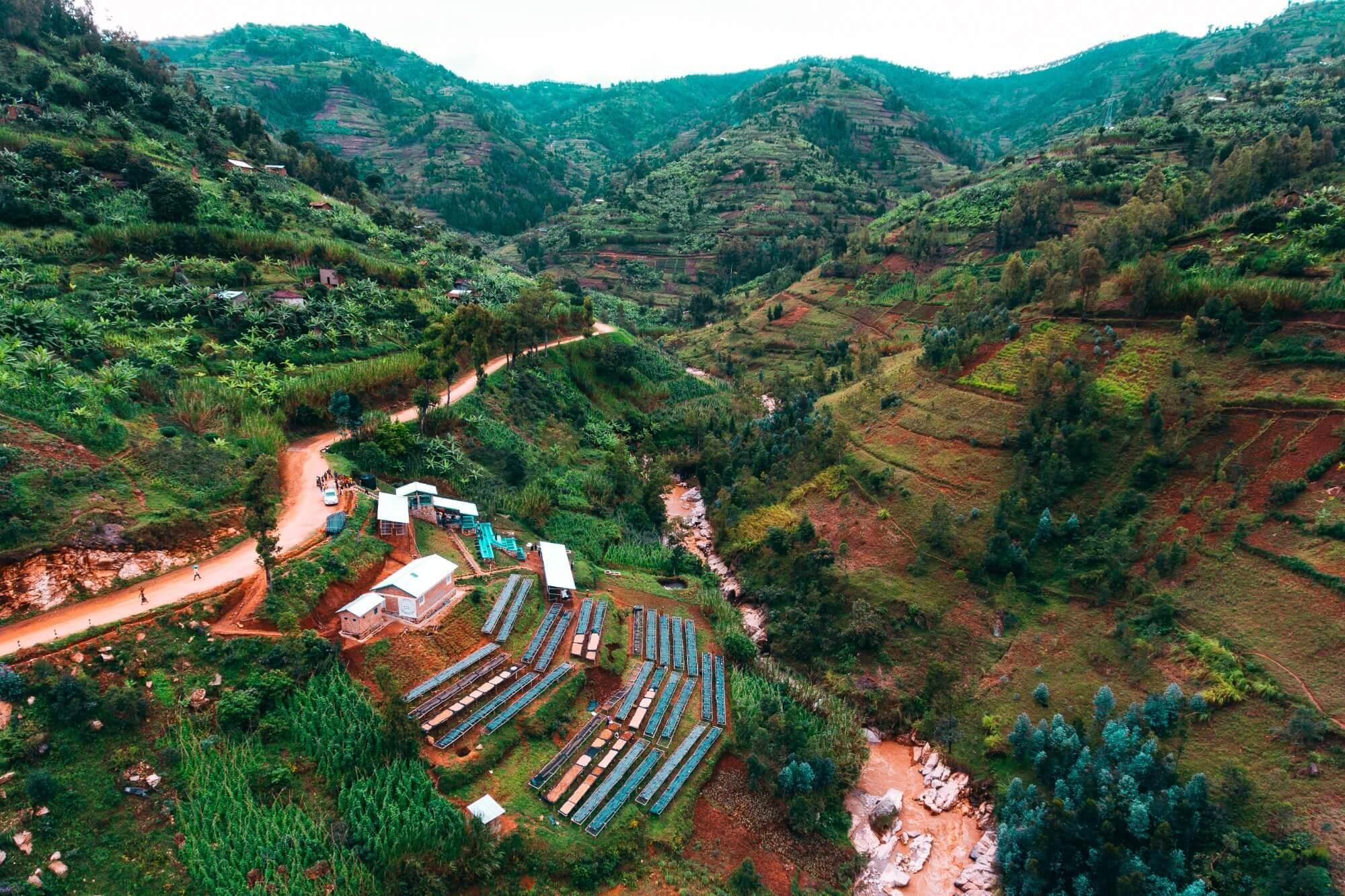 直接援助產地的咖啡生產計畫