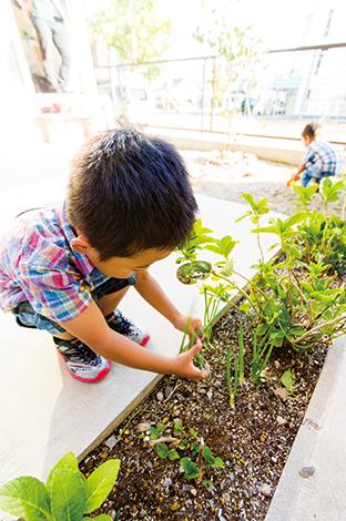 アトリエプラス【デザイン住宅、狭小住宅、建築家】コンパクトな敷地でもテラスと土の庭を実現し、子どもたちもゴキゲン!