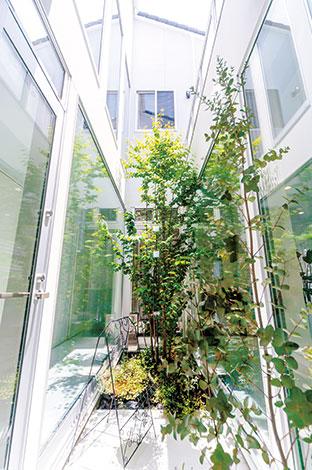 ito-pro イトープロ【デザイン住宅、趣味、省エネ】南面に隣家が迫っているので、家の中央に中庭を設けて光を確保した。 天空に向かって伸びる木はカツラ