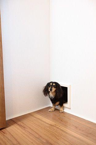 アイ・ディー・スリー 池田建設【屋上バルコニー、ガレージ、鉄骨鉄筋コンクリート構造】愛犬が階段から落ちないよう、廊下を通さずリビングと寝室を直接つなぐ、専用のトンネル
