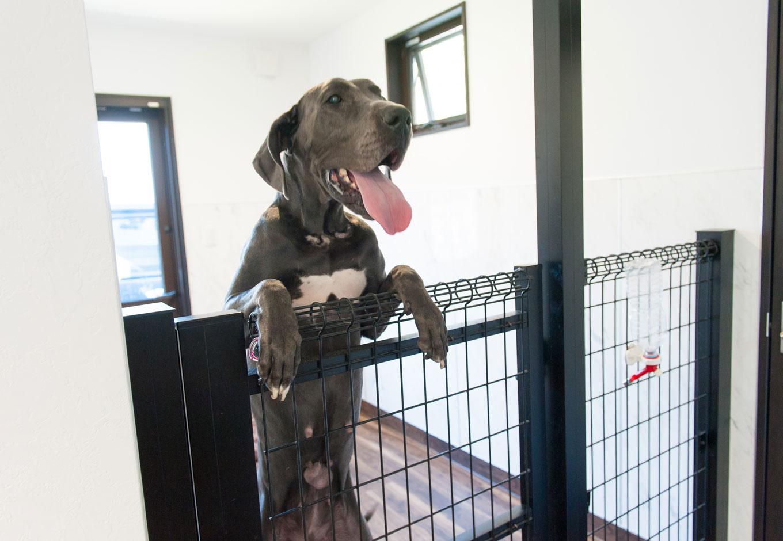 シバタ建設【子育て、ペット、インテリア】愛犬用に、設置した柵