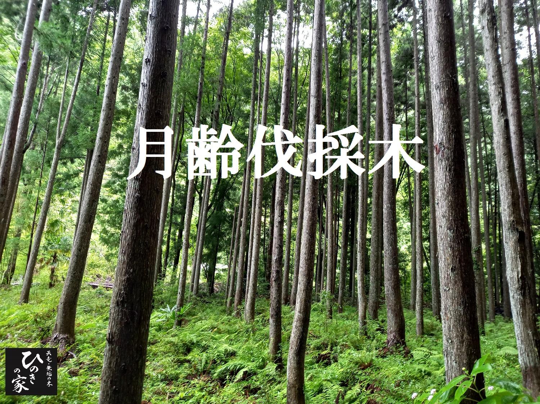 ★「木」から選ぶ家づくり★(耐久性と香り)木の勉強会