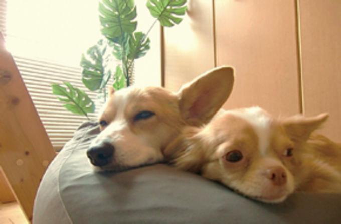 ペットと快適に暮らす家