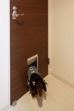 五朋建設【デザイン住宅、狭小住宅、屋上バルコニー】寝室ドアにはアルちゃんが自由に出入りできる扉を設置した