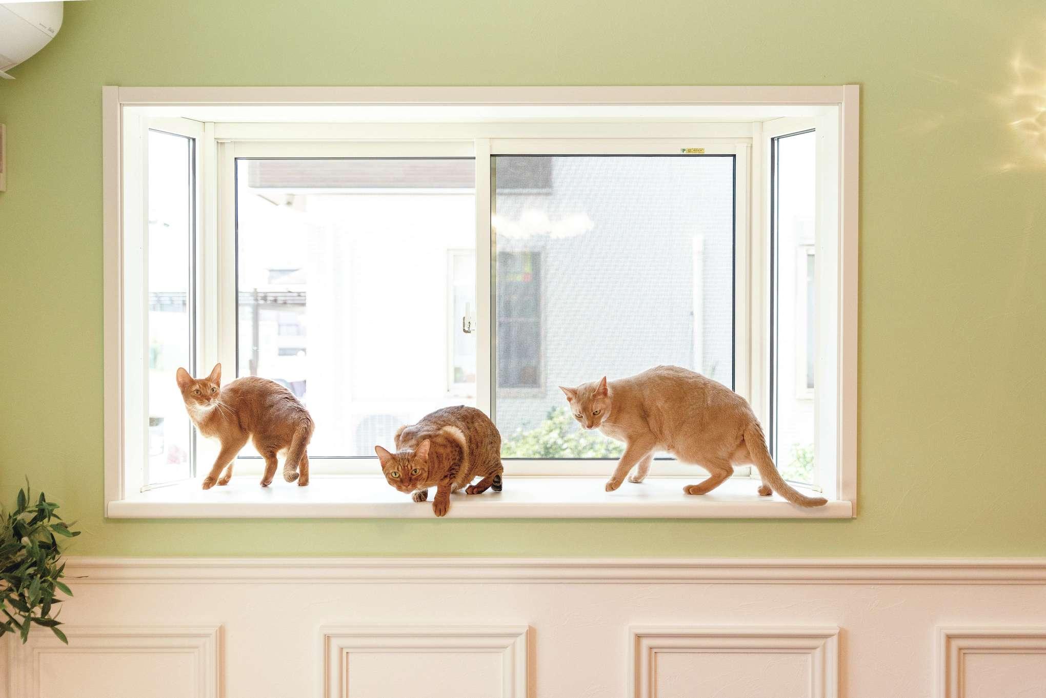 出窓から外の様子をチェック!? リビングには猫たちが飛び乗りやすい腰高の出窓を