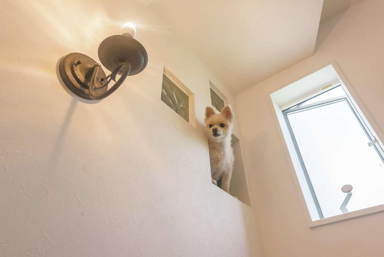 玄関を入ると、階段の小窓から愛犬がお出迎えしてくれる